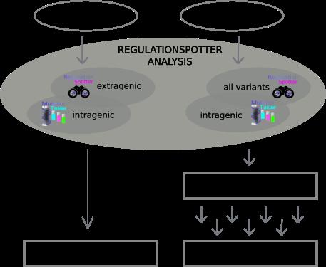 RegulationSpotter workflow